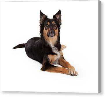 Attentive Mixed Breed Dog Laying Canvas Print by Susan  Schmitz
