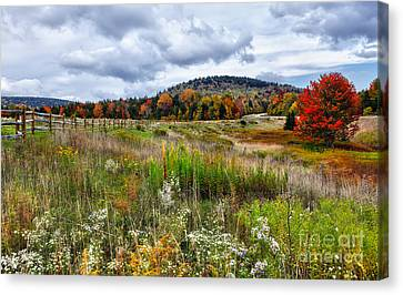 August Fall Colors Flowers And Trees I - West Virginia Canvas Print by Dan Carmichael