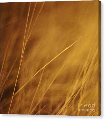 Aurum Canvas Print by Priska Wettstein