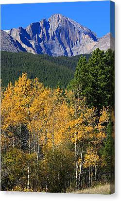 Autumn Aspens And Longs Peak Canvas Print by James BO  Insogna