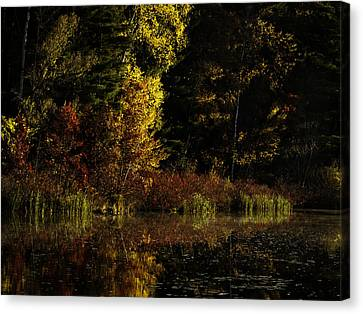 Autumn At It's Finest Canvas Print by Thomas Young