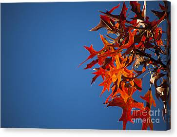 Autumn Blue Canvas Print by Wayne Moran