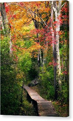 Autumn Boardwalk Canvas Print by Bill Wakeley