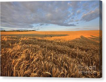 Autumn Bounty Canvas Print by Dan Jurak