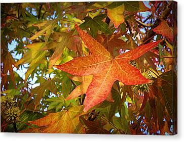 Autumn Burns Brightly - Nature Art Canvas Print by Jordan Blackstone