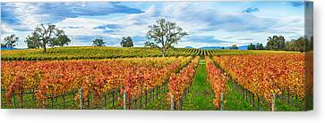 Autumn Color Vineyards, Guerneville Canvas Print by Panoramic Images