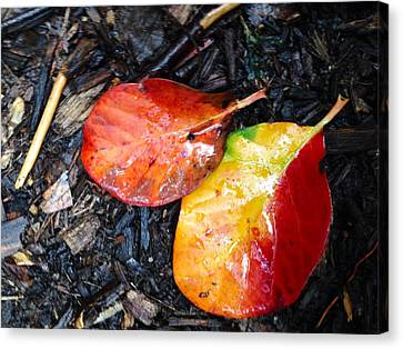Autumn Colors Canvas Print by Felix Zapata