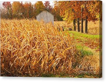 Autumn Corn Canvas Print by Mary Carol Story