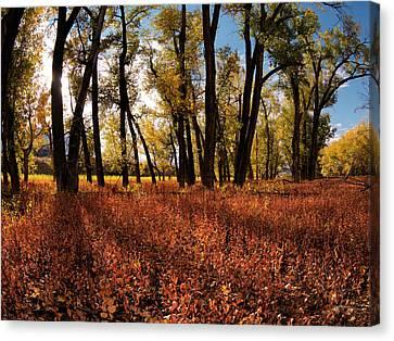 Autumn Cottonwood Sanctuary Canvas Print by Leland D Howard