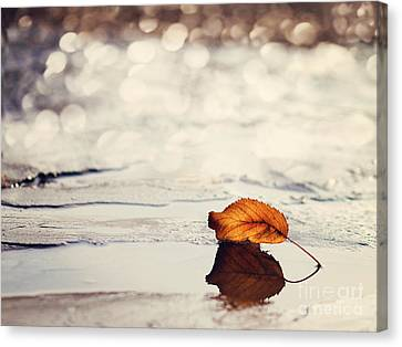 Autumn Canvas Print by Diana Kraleva