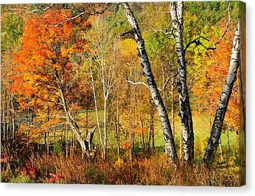 Autumn Forest Scene - Litchfield Hills Canvas Print by Thomas Schoeller
