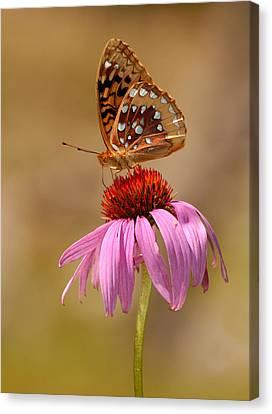 Autumn Fritillary Butterfly Canvas Print by Lara Ellis