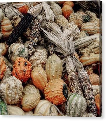 Autumn Gourds 2 Canvas Print by Joann Vitali