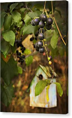 Autumn Grapes With Birdhouse Canvas Print by Theresa Tahara