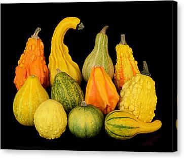 Autumn Harvest Gourds Canvas Print by Jim Hughes