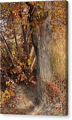 Autumn Hideaway Canvas Print by Carol Groenen