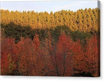 Autumn In Arcadia Canvas Print by Sheryl Burns