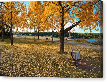 Autumn In Calgary Canvas Print by Trever Miller
