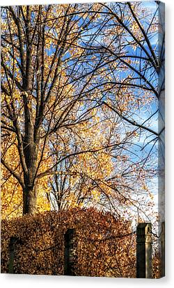 Autumn In Chicago Canvas Print by Anthony Citro