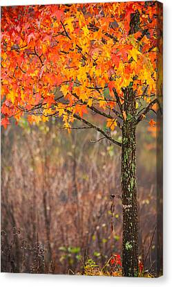 Autumn In Connecticut Canvas Print by Karol Livote