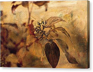 Autumn In The Garden  Canvas Print by Maria Angelica Maira