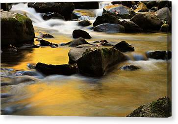 Autumn In The Water Canvas Print by Dan Sproul