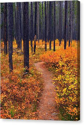 Autumn In Yellowstone Canvas Print by Raymond Salani III