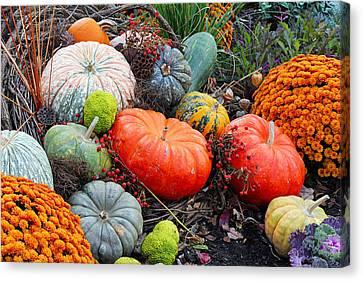 Autumn Joy Canvas Print by Becky Lodes