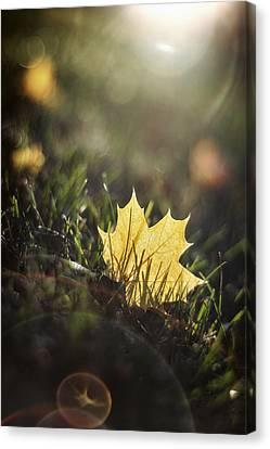 Autumn Leaf Sunset Canvas Print by Scott Norris