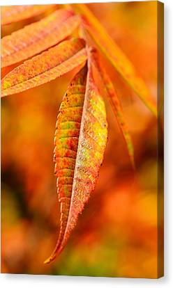 Autumn Leaves Canvas Print by Gynt