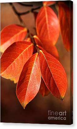 Autumn Leaves Canvas Print by Joy Watson
