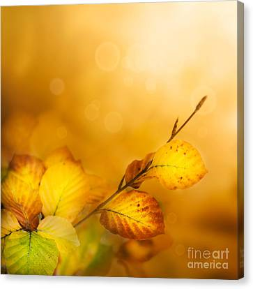 Autumn Leaves Canvas Print by Mythja  Photography