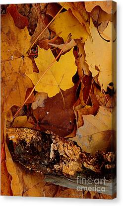 Autumn Leaves Of Yellow And Brown Canvas Print by ImagesAsArt Photos And Graphics