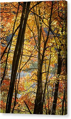 Autumn Light Canvas Print by Barbara Smith
