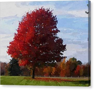 Autumn Canvas Print by Maciej Froncisz