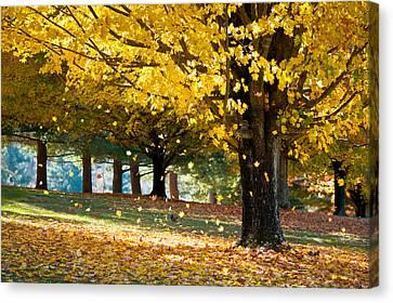Autumn Maple Tree Fall Foliage - Wonderland Canvas Print by Dave Allen