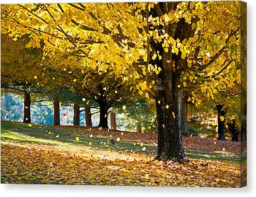 Autumn Maple Tree Fall Foliage - Wonderland Canvas Print by Dave Allen
