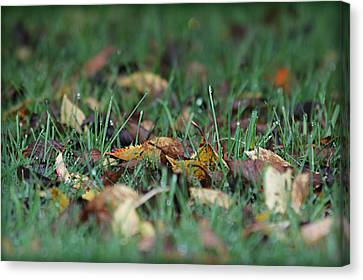 Autumn Morning Canvas Print by Katie Wing Vigil