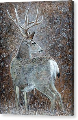 Autumn Muley Canvas Print by Mike Stinnett