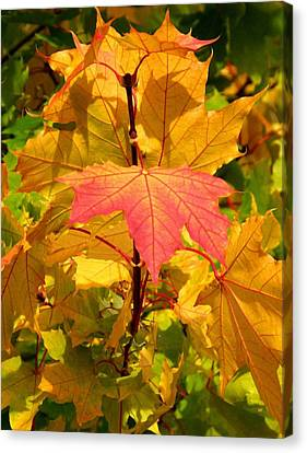 Autumn Pigmentation Canvas Print by Will Borden