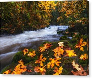 Autumn Returns Canvas Print by Darren  White