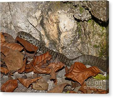 Autumn Snake Canvas Print by Phil Banks