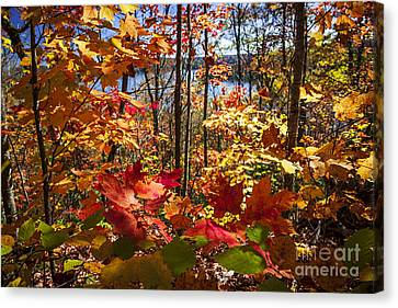 Autumn Splendor Canvas Print by Elena Elisseeva