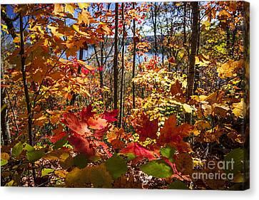 Autumn Splendor Canvas Print by Elena Elisseeva