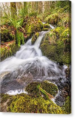 Autumn Stream Canvas Print by Adrian Evans