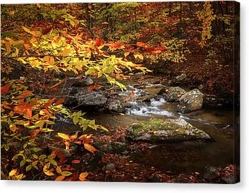 Autumn Stream Canvas Print by Bill Wakeley