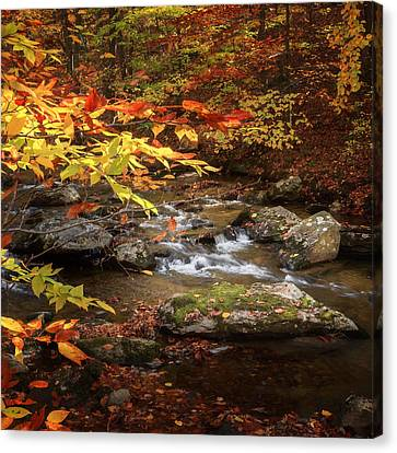 Autumn Stream Square Canvas Print by Bill Wakeley