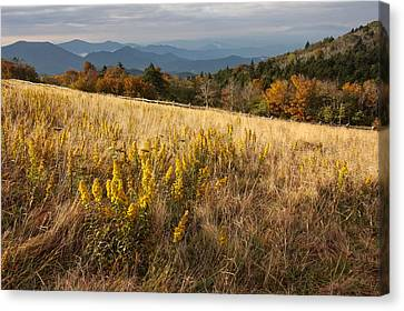 Autumn Sunlight At Roan Mountain Canvas Print by Keith Clontz