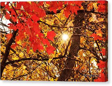 Autumn Sunrise Painterly Canvas Print by Andee Design