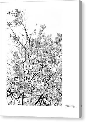 Autumn Tree In Black And White 2 Canvas Print by Xoanxo Cespon